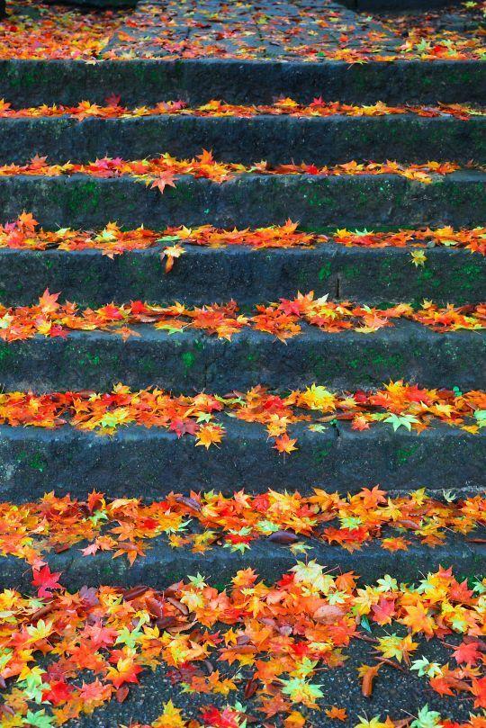 太平寺の紅葉