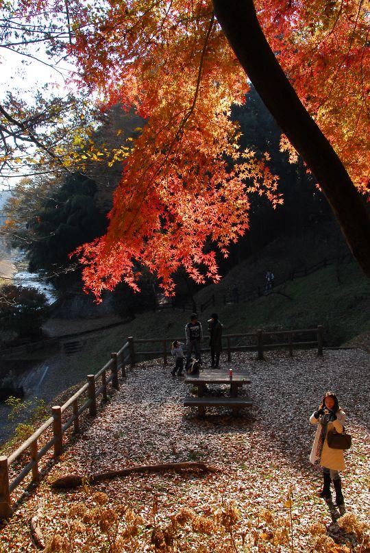 龍門の滝・観瀑