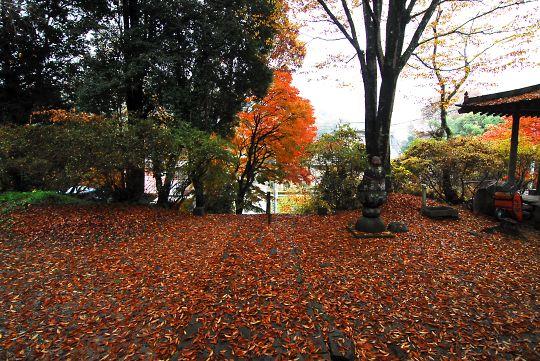 境内の散り紅葉