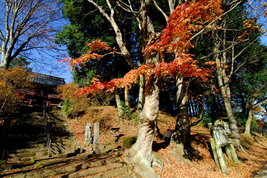 晩秋の太平寺