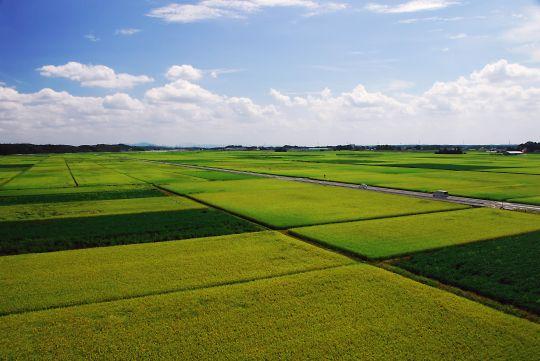 大穀倉地帯